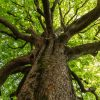Mese a fáról