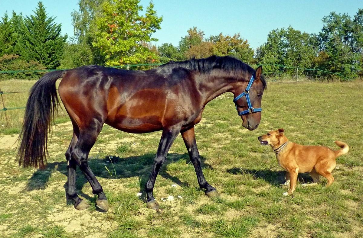 Az ember, a lova és a kutyája